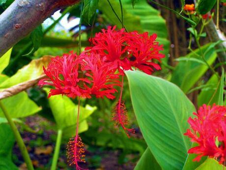 St. Maarten bloemen