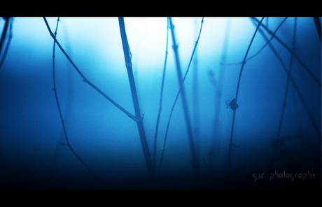 fog vs light