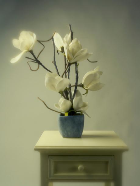 witte-bloemen in pot-AEP