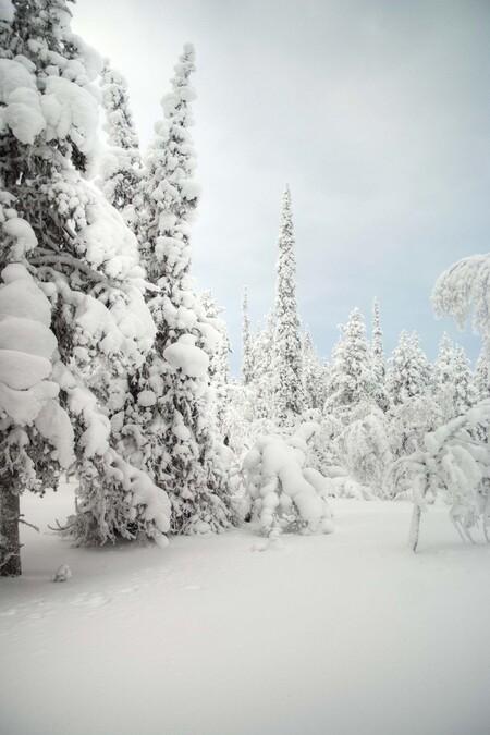 sneeuwlandschap - Het blijft een wonder hoe de planten en dieren kunnen overleven met zoveel sneeuw en kou. - foto door marloes_pareren op 12-10-2012 - deze foto bevat: sneeuw, winter, kou, reisfotografie