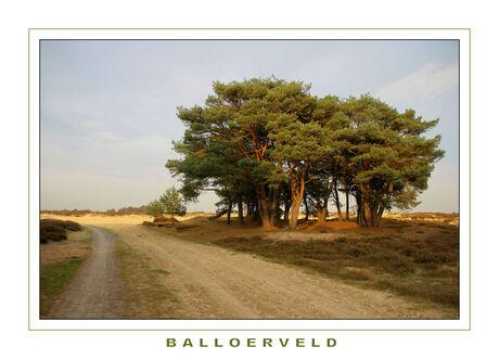 Balloerveld
