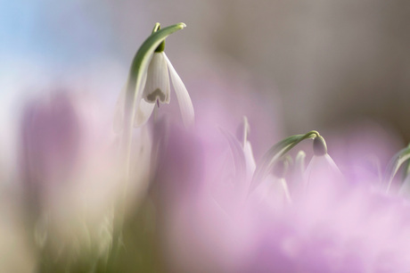 In a purple haze