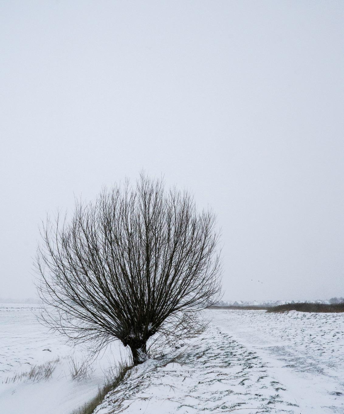 knotwilg - Sneeuw landschap - foto door yboschutte op 08-03-2021 - deze foto bevat: sneeuw, winter