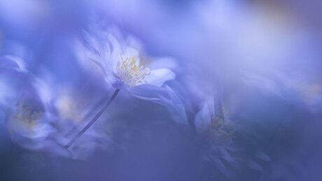 Joy of spring 2