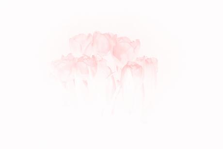 Tulpen bewerkt