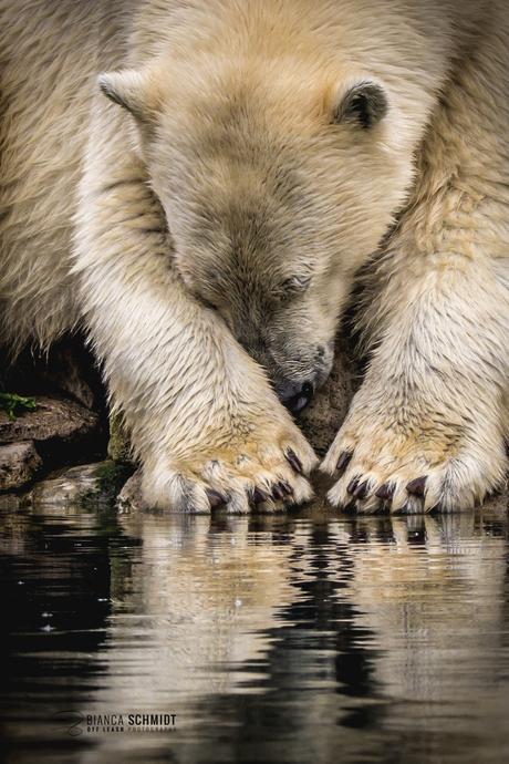 Polar beauty sleep
