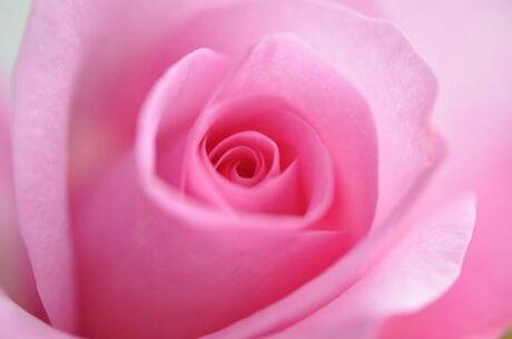 Rose Roosje