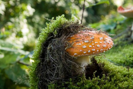 paddenstoel power
