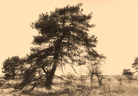 Wolfhezerheide -Winter - Deze foto heb ik  enige tijd geleden gemaakt, tijdens de sneeuwperiode. Ik had de foto ook gistermorgen kunnen maken. Is de winter nu echt voorbij  : - foto door hvr2105 op 08-04-2021 - deze foto bevat: wolfheze, landschap, sneeuw, lucht, afdeling, natuurlijk landschap, fabriek, boom, kofferbak, hout, groenblijvend, horizon, tinten en schakeringen