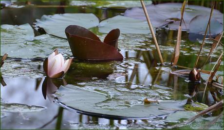 Eco tuin Schoten België