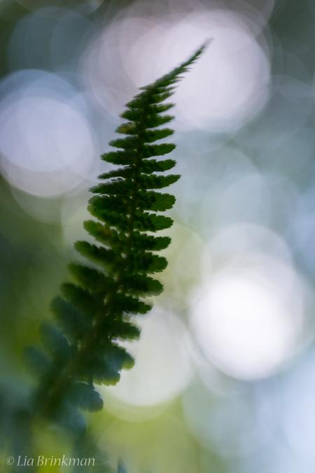 dancing in the forest - dancing in the forest,  De bladeren van de varens dansen vrolijk met de wind. - foto door hulsman op 24-07-2016 - deze foto bevat: groen, macro, geel, licht, blad, bos, tegenlicht, zomer, varen