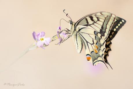 De koningin onder de vlinders (1/3)