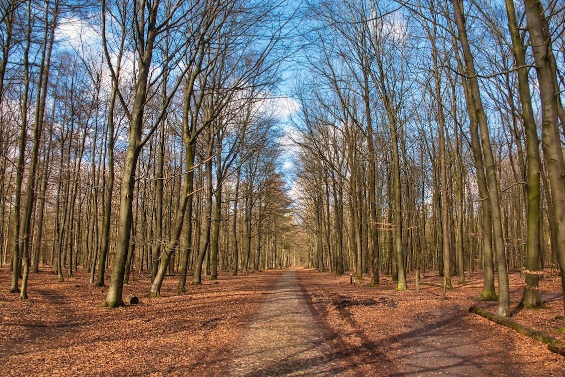 Keienpad - Tijdens een wandeling door de Hondsrug kom je bijna altijd wel een keienweg tegen. Deze keienwegen zijn gemaakt van veldkeien die lang geleden met he - foto door JerPet op 18-03-2021 - deze foto bevat: groen, lucht, wolken, zon, boom, natuur, licht, landschap, bos, nederland, hondsrug