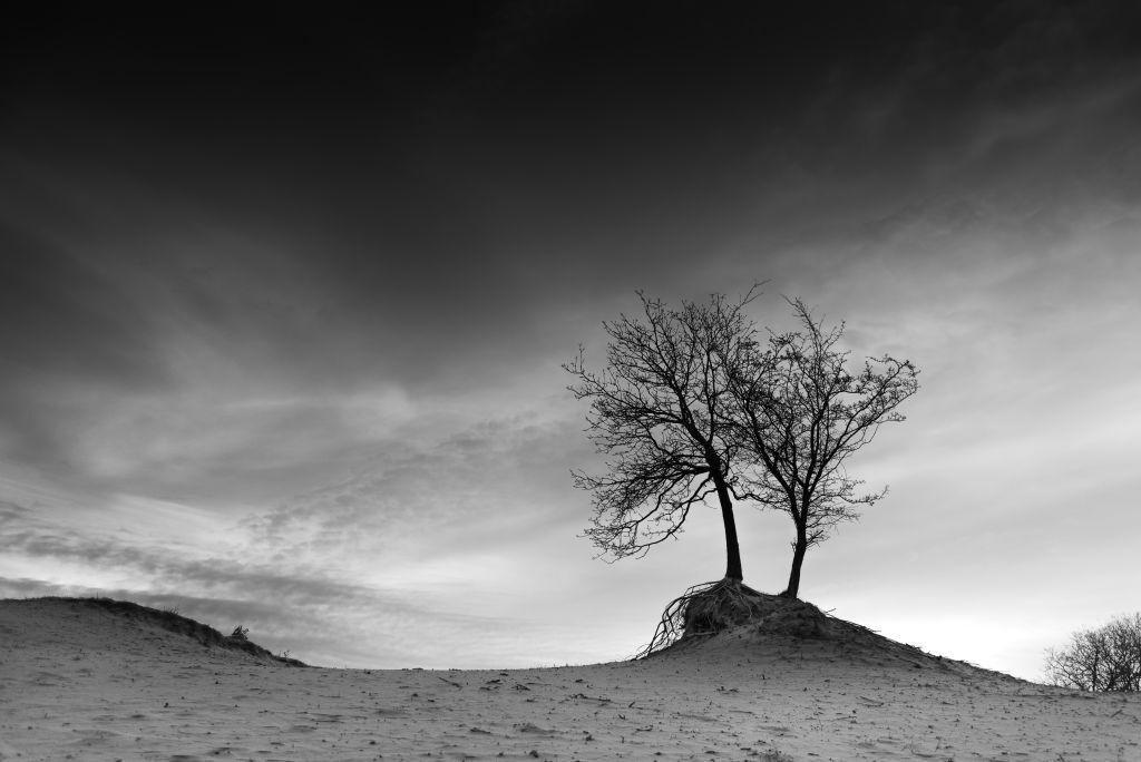duintop - Twee eenzame bomen op een duintop. - foto door erveer op 16-04-2021 - locatie: Zandvoortselaan 130, 2042 XC Zandvoort, Nederland - deze foto bevat: monochrome, zwart/wit, wolken, duin, bomen, wolk, lucht, atmosfeer, fabriek, boom, wereld, afdeling, hout, natuurlijk landschap, zwart en wit