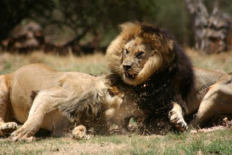Food fight !!