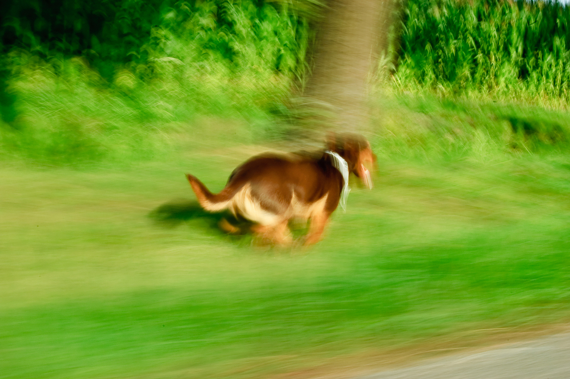 running dog - Dit is mijn hond. - foto door ronaldvdplas op 07-09-2011 - deze foto bevat: gras, groen, huisdier, hond, actie, snelheid, beweging, rennen, waas, wazig, blur, bewegen, rennende hond