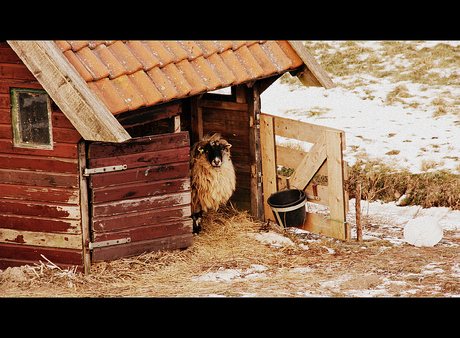 wintersfeer 2