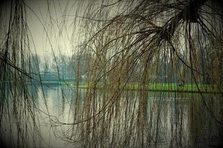 Door de bomen....