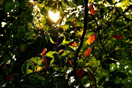 De Eerste Herfstblaadjes