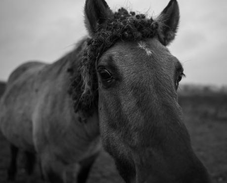horseyes