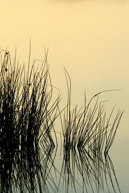 Stilte - Afgelopen zaterdag, de 2e editie, met enkele zoomers vroeg op pad geweest op de Utrechtse Heuvelrug. Landschap, macro, closeup, dauw, zonsopkomst, sp - foto door oostindienjp op 13-09-2015 - deze foto bevat: licht, zoomdag, stilte, warmte, sereen, tijdloos