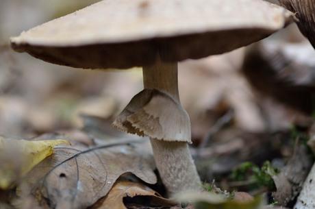 Steel paddenstoel