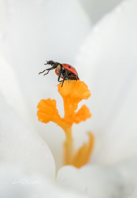 Ladybug on top - - - foto door luciadedycker op 03-03-2021 - deze foto bevat: groen, macro, zon, bloem, natuur, lieveheersbeestje, geel, licht, oranje, tuin, insect, bokeh