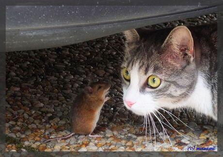 Grijs met muis