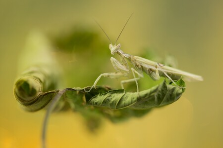 light green - tja titel klopt wel een beetje geloof ik - foto door dylano op 24-12-2018 - deze foto bevat: groen, macro, geel, insect, dylano