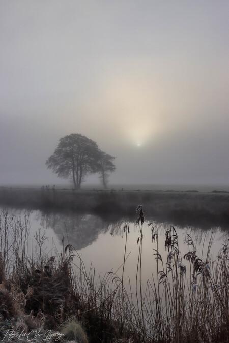 mistige dag - - - foto door olav_zoom op 28-02-2021 - deze foto bevat: lucht, wolken, zon, water, natuur, licht, winter, landschap, mist, zonsopkomst, bomen