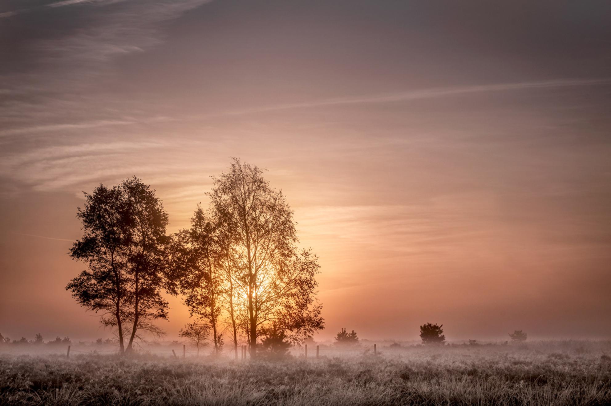 Here comes the sun - - - foto door marjoleinvanhelmond op 10-10-2018 - deze foto bevat: lucht, wolken, natuur, licht, herfst, landschap, mist, heide, brabant, tegenlicht, zonsopkomst, bomen, Strabrechtse heide
