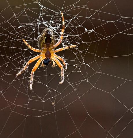 spin tegenlicht