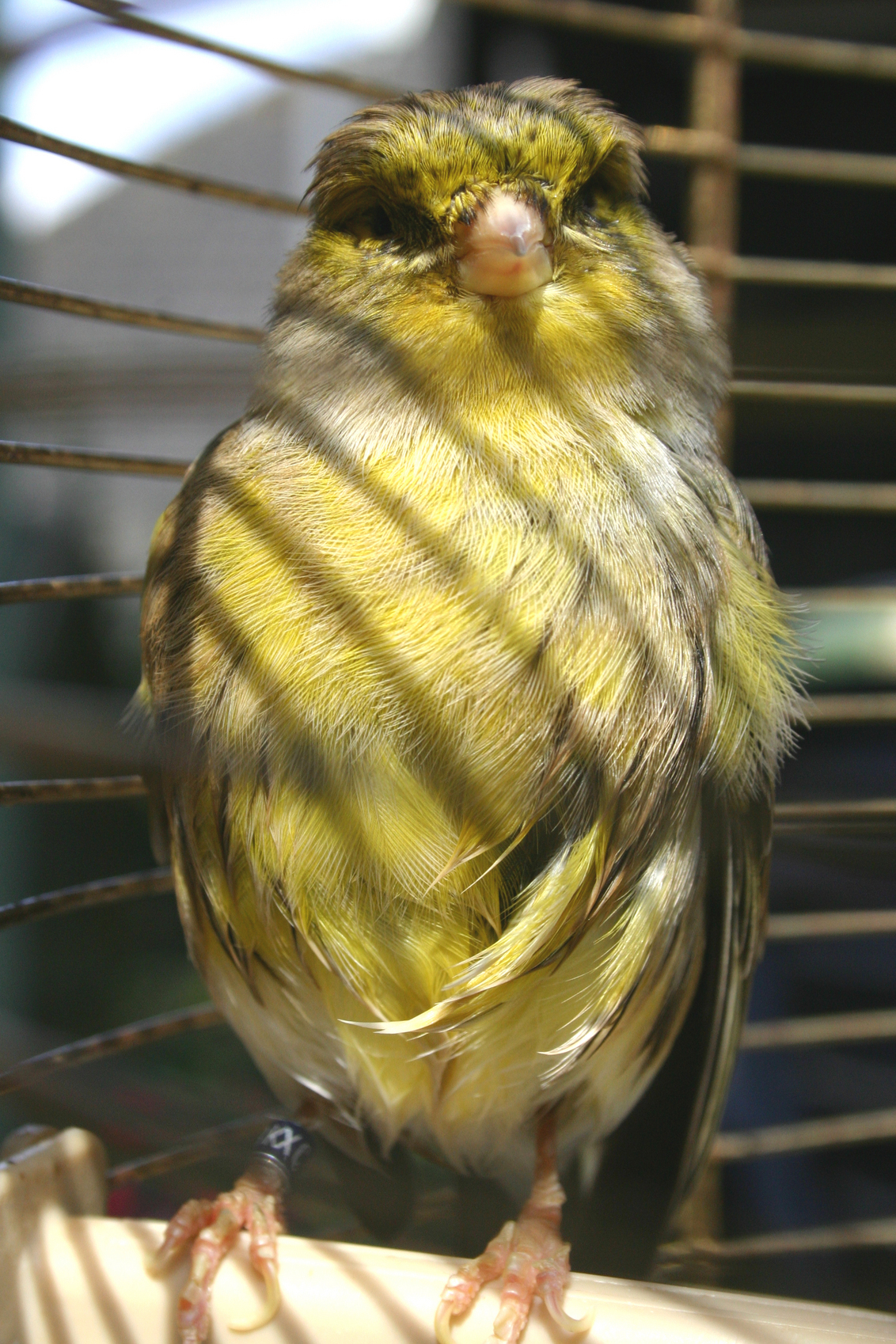 gerard - - - foto door marjanmax op 07-01-2009 - deze foto bevat: natuur, vogels, dieren, vogel, gevangen