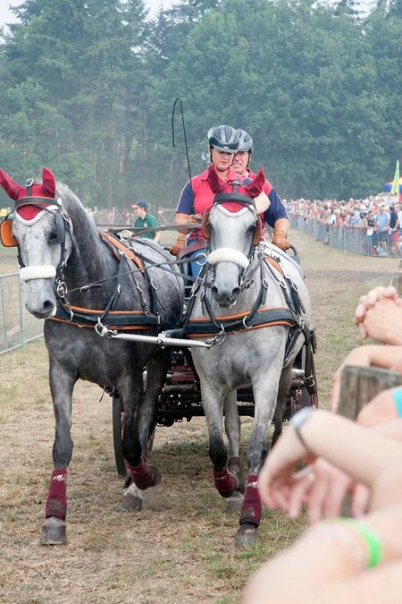 Op de verbinding naar de volgende proef - - - foto door rudyl op 25-02-2020 - deze foto bevat: paard, paardensport