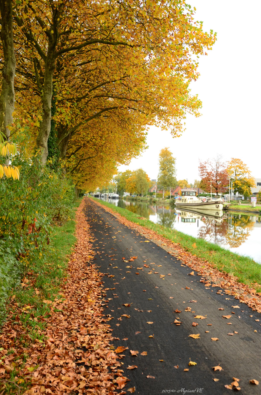 Schoten vaart - kanaal Dessel-Schoten - Herfst ... toch een mooi varierend seizoen. Net voor de laatste blaadjes de bomen loslaten. - foto door MyriamVE op 30-10-2015