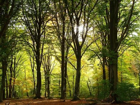 A peek through the trees