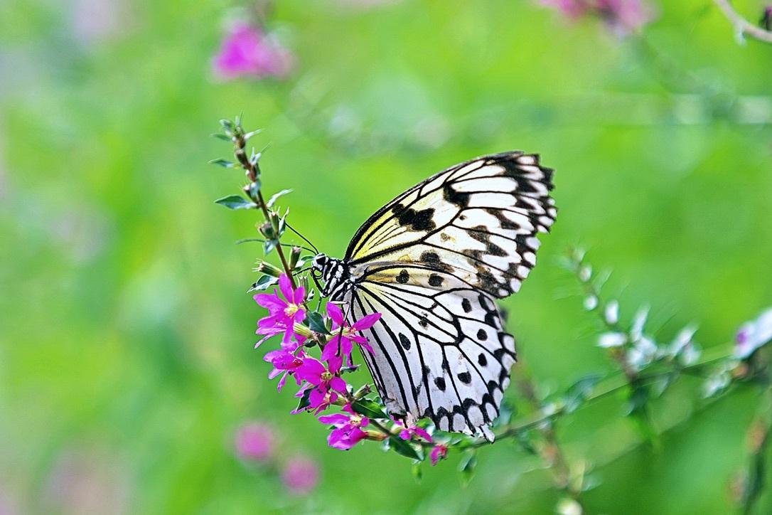 Papiervlinder - . - foto door Time---traveler op 13-04-2021 - deze foto bevat: bloem, fabriek, bestuiver, insect, geleedpotigen, vlinder, motten en vlinders, gras, bloemblaadje, bloeiende plant