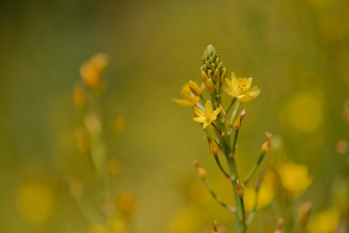 Geel veld - ** - foto door dettyverbon op 27-05-2014 - deze foto bevat: bloem