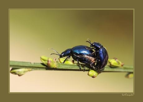Blue Love*