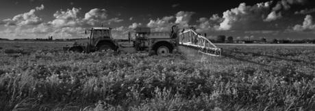 Landbewerken in Muntendam