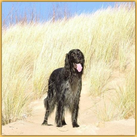 Chuck op strand