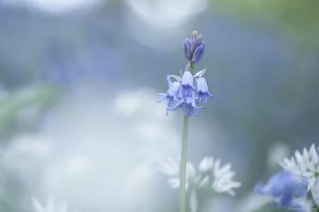 Boshyacinth... - Zoomdagje in de Botanische tuinen onder leiding van Mr. Henk ;-) Was weer gezellig! - foto door Kate1965 op 30-04-2017 - deze foto bevat: paars, macro, wit, blauw, zon, bloem, lente, natuur, licht, tuin, tegenlicht, dof, bokeh