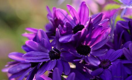 bloemengroet///