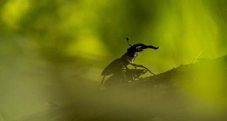 Vliegende herten