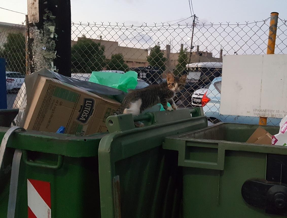 Ik keek alleen maar - - - foto door Bianca-101 op 28-05-2018 - deze foto bevat: kitten, klein, poes, dieren, kat, dier, zwerfkat, kwetsbaar, vuilnis, jong, poesje, katje, afvalbak, container, vuil, afval, katachtige, schattig, vuilnisbak, zwerfkatje