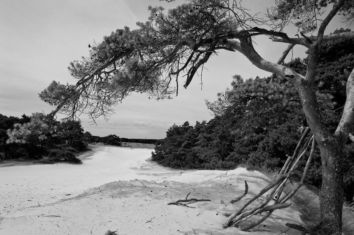 Into the trees - Zwartwit experiment van een prachtig stukje van het Wekeromse zand bij Lunteren - foto door jozsef op 12-08-2009 - deze foto bevat: lunteren