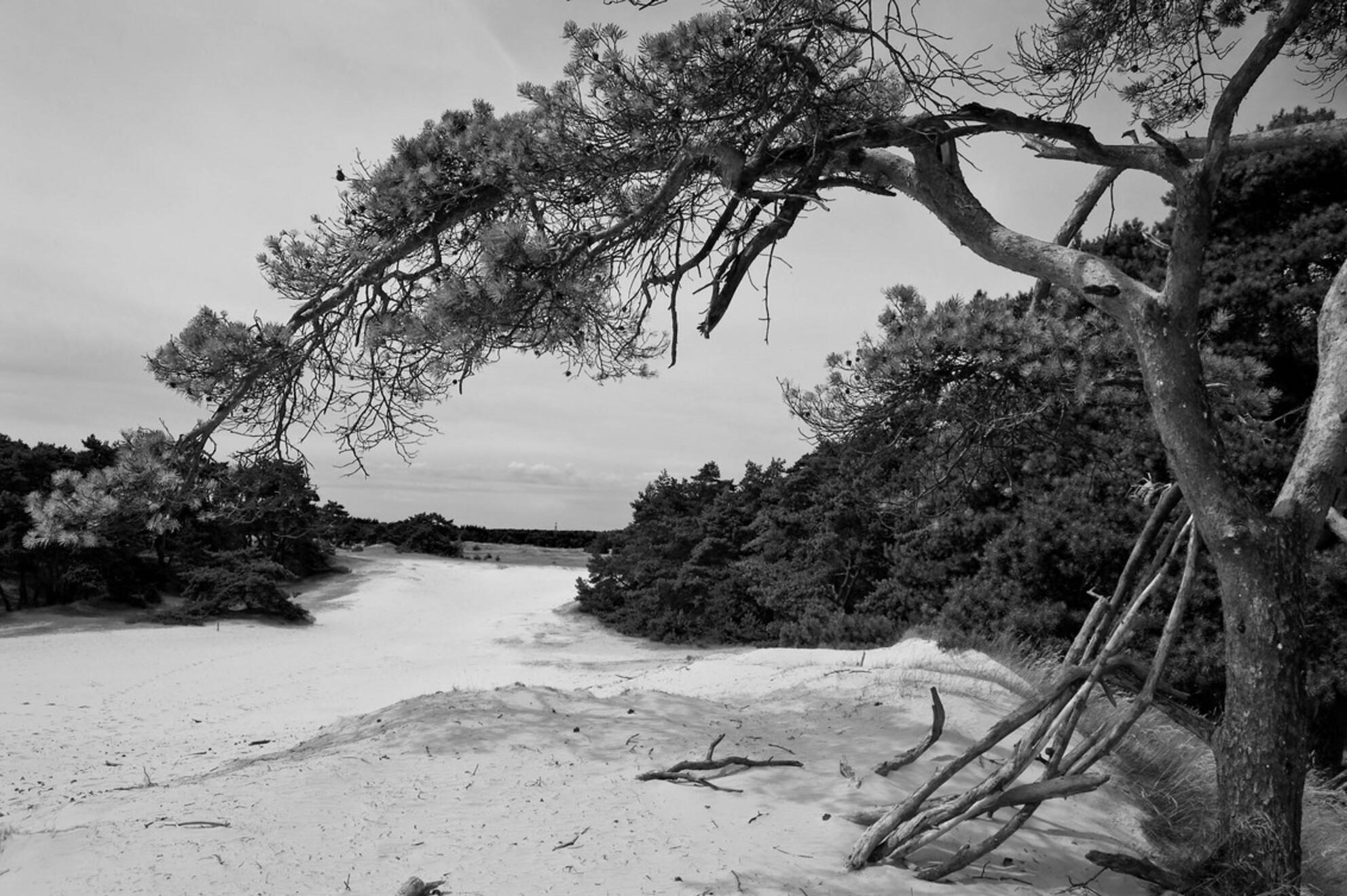 Into the trees - Zwartwit experiment van een prachtig stukje van het Wekeromse zand bij Lunteren - foto door jozsef op 12-08-2009 - deze foto bevat: lunteren - Deze foto mag gebruikt worden in een Zoom.nl publicatie