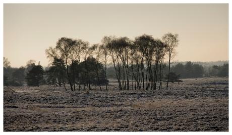 Winter in Hoog Buurlo