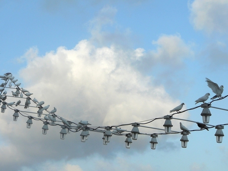 Benidorm duiven