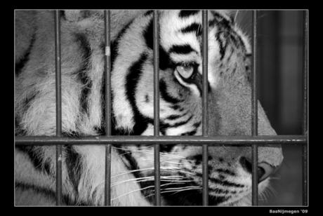 Behind bars II